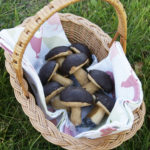 Ciasteczka – borowiki – grzybki